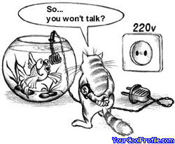 funny-cats-x.jpg